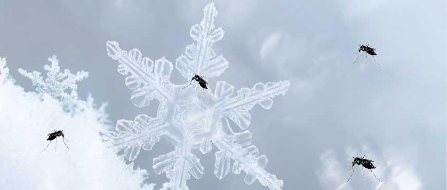 L'aria condizionata puo aiutare a combattere le zanzare